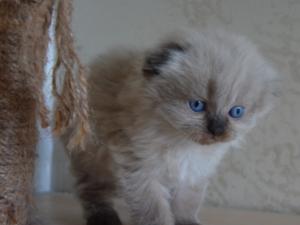 Özlüce Mah. kedi ilanları