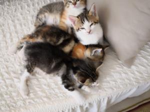 Dişi ve Erkek kedi Ahi Evran OSB