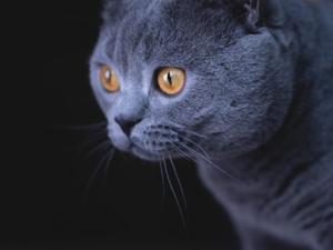 Dişi ve Erkek kedi Çayyolu Mah.
