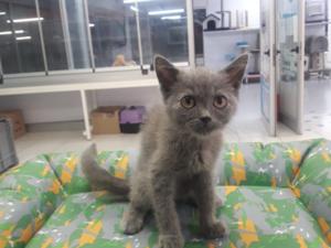 Balat Mah. kedi ilanı