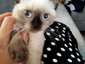 Namık Kemal Mah. kedi ilanları