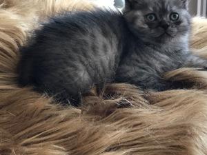 0-3 Aylık kedi Mecidiyeköy Mah.