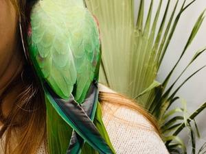 Afrika gri papağanı / jako papağanı Sahibinden 1150 TL