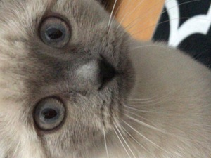 Dişi kedi Yarenler Mah.