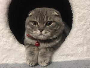 Kanal Mah. kedi fiyatları