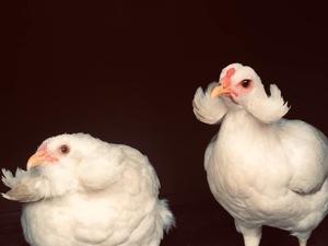 Yukarı Dudullu Mah. hayvanlar ilanı