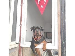 Pınartepe Mah. köpek fiyatları