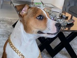 Diğer köpek ırkı köpek Buca