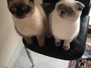 Hamitler Mah. kedi ilanları