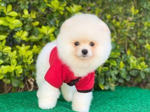 Site Mah. köpek fiyatları