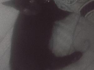 Tekir kedi Şehitkamil