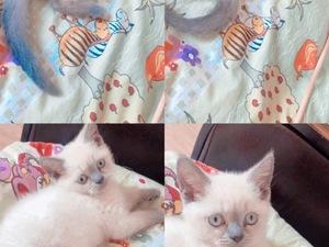 3-6 Aylık kedi Gürselpaşa Mah.
