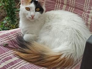 Ankara Batıkent Kayıp Kedi