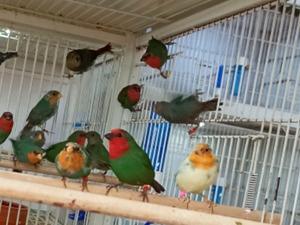 Tayakadın Mah. Finch kuşu fiyatları