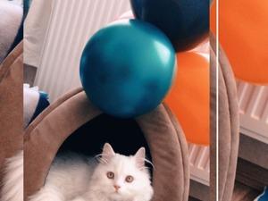 Erkek kedi Karataş Mah.