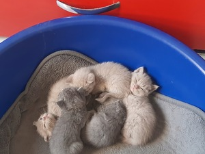 Ziyapaşa Mah. kedi ilanı