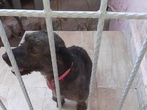 Gümüşpala Mah. köpek ilanı ver