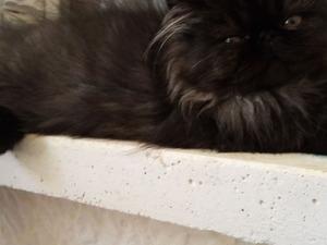 Mahmutlar Bld. kedi ilanları