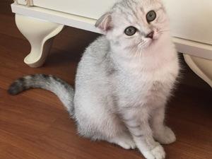 Güzeloba Mah. kedi fiyatları