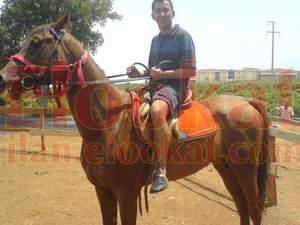 satılık şampiyon arap atı ALAÇATI